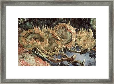 Four Withered Sunflowers Framed Print by Vincent van Gogh
