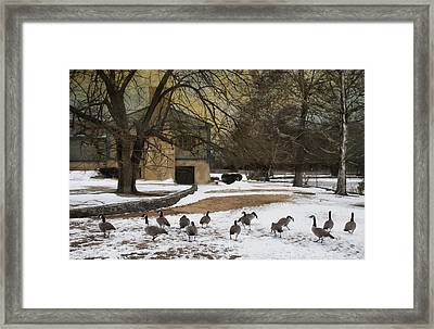 Fowl Weather Framed Print by Robin-lee Vieira