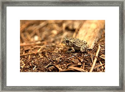 Fowler's Toad At Trap Pond Framed Print by Anna Lisa Yoder