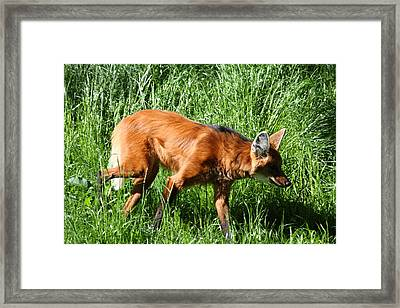 Fox - National Zoo - 01137 Framed Print by DC Photographer
