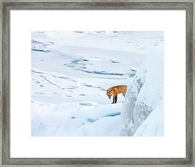 Fox Of The North V Framed Print by Mary Amerman