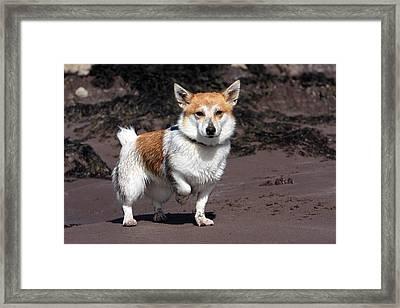 Terrier At The Beach Framed Print by Aidan Moran