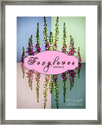 Foxgloves Times 4 Framed Print by Margaret Newcomb