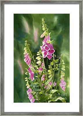 Foxgloves With Background Framed Print by Sharon Freeman