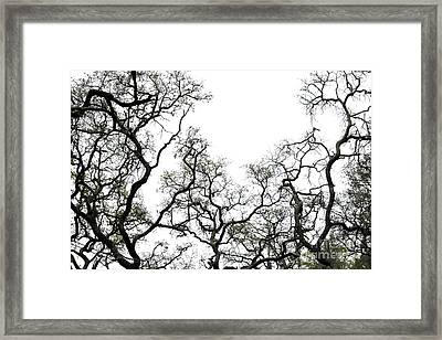Fractal Branches Framed Print by Theresa Willingham
