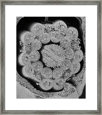 Fractured Anther Framed Print by Natural History Museum, London