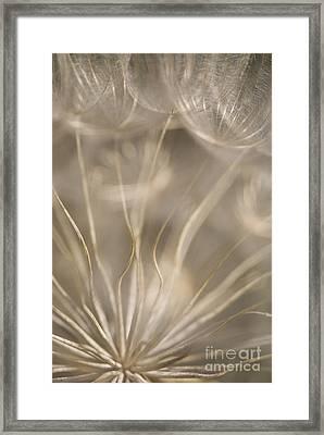 Fragile Framed Print by Anne Gilbert