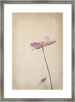 Fragility Framed Print by Amy Weiss