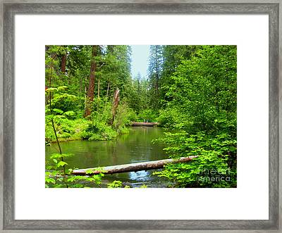 Framed By Nature Framed Print by Shasta Eone