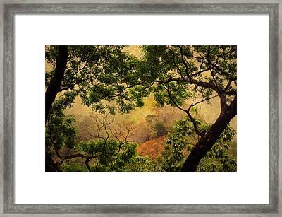 Framing Tree Branches Framed Print by Jenny Rainbow
