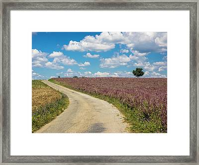 France, Provence, Country Backroad Framed Print by Terry Eggers