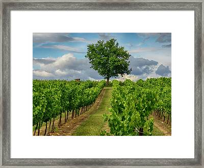 France, Provence, Lone Tree In Vineyard Framed Print by Terry Eggers