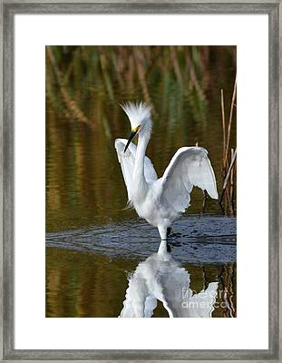 Frazzled Framed Print by Kathy Baccari