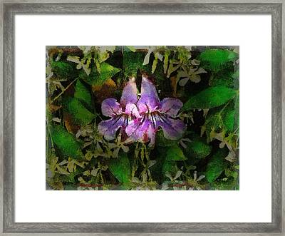 Fred Framed Print by Cary Shapiro