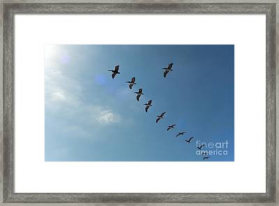 Free Flight Framed Print by Peggy Hughes