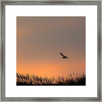 Free Square Framed Print by Bill Wakeley