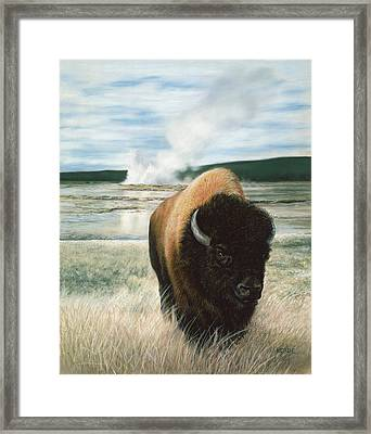 Free To Roam Framed Print by Karen Cade