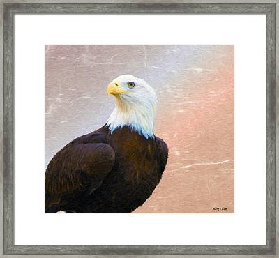 Freedom Flyer Framed Print by Jeff Kolker