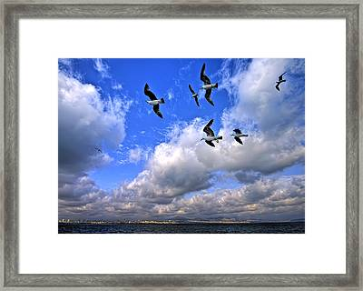 Freedom Flying Threw Our Wings Framed Print by Leyla Ismet