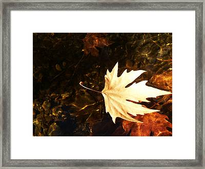 Freedom Framed Print by Lucy D
