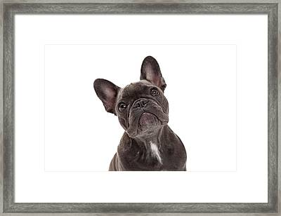 French Bulldog Closeup Framed Print by Susan  Schmitz