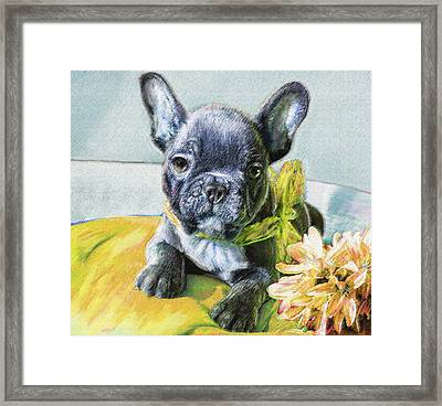 French Bulldog Puppy Framed Print by Jane Schnetlage