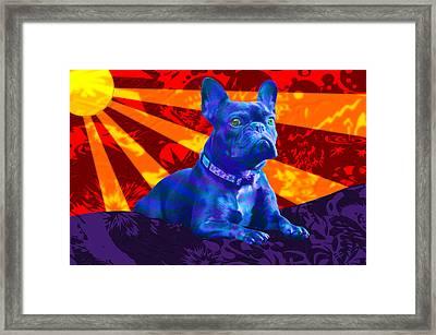 French Bulldog Framed Print by Sean Corcoran