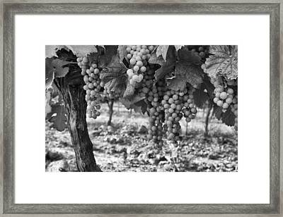 French Grapes Framed Print by Georgia Fowler