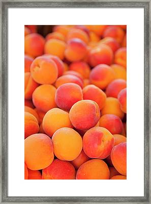 Fresh Apricots For Sale At The Market Framed Print by Brian Jannsen