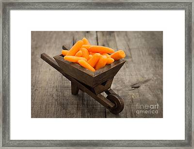 Fresh Carrots In A Miniature Wheelbarrow  Framed Print by Aged Pixel