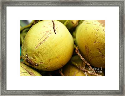 Fresh Coconut Framed Print by Cheryl Young