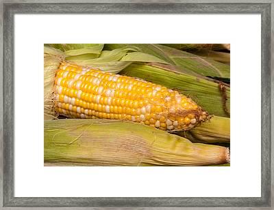 Fresh Corn At Farmers Market Framed Print by Teri Virbickis