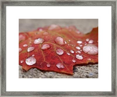 Fresh Drops Framed Print by Christina Rollo