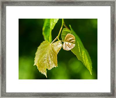 Fresh - Featured 3 Framed Print by Alexander Senin