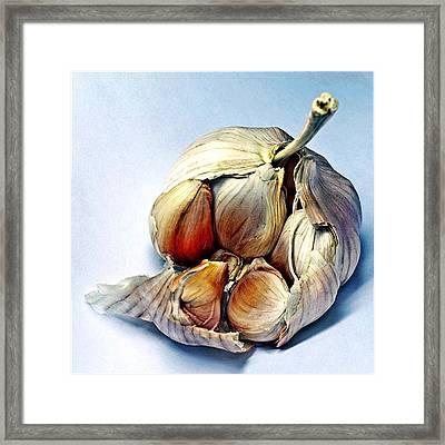 Fresh Garlic  Framed Print by Davids Digits