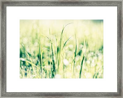 Fresh Green Grass In Bright Light Framed Print by Matthias Hauser