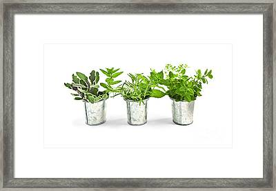 Fresh Herbs In Pots Framed Print by Elena Elisseeva