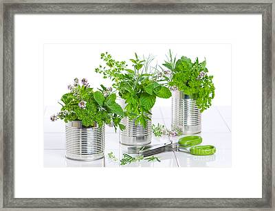 Fresh Herbs In Recycled Cans Framed Print by Amanda And Christopher Elwell