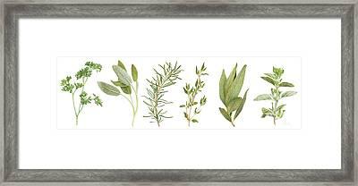 Fresh Herbs Framed Print by Paula Pertile