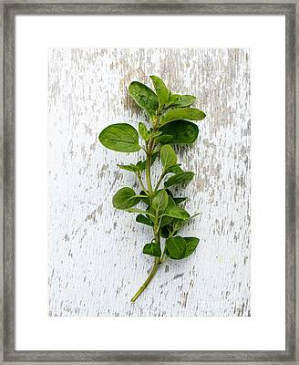 Fresh Oregano Framed Print by Nailia Schwarz