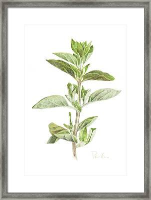 Fresh Oregano Framed Print by Paula Pertile
