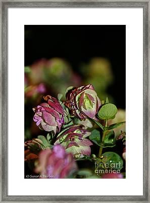 Fresh Oregano Framed Print by Susan Herber