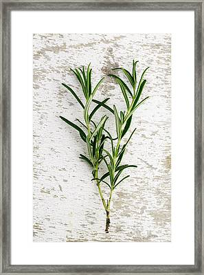 Fresh Rosemary Framed Print by Nailia Schwarz