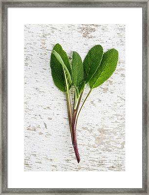 Fresh Sage Framed Print by Nailia Schwarz