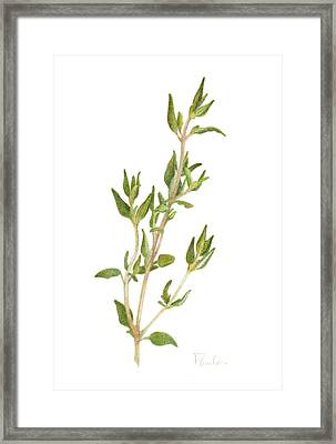 Fresh Thyme Framed Print by Paula Pertile