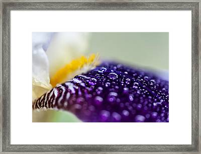 Fresh Touch. Secret Life Of Iris Framed Print by Jenny Rainbow
