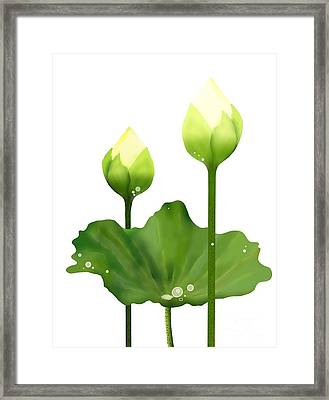 Fresh White Lotus Flowers And Leaf On White Background Framed Print by Iam Nee