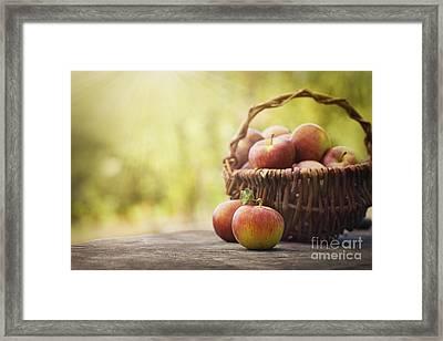 Freshly Harvested Apples Framed Print by Mythja  Photography