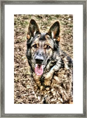 Friend For Life Framed Print by Rebecca Frank