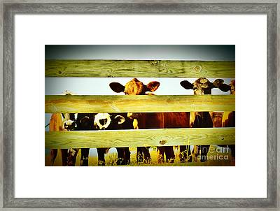 Friendly Cows Framed Print by Lynda Dawson-Youngclaus